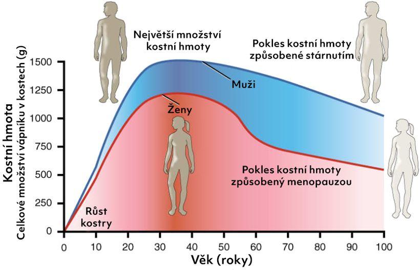 Kosti rostou pouze do 30 let! Je mléko nejlepším zdrojem vápníku?