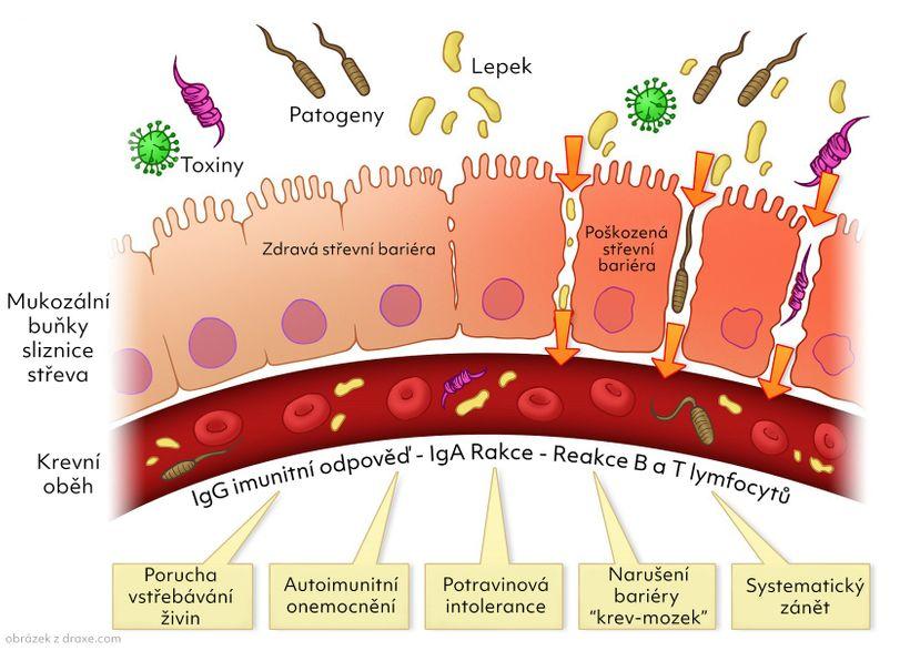 Probiotika, prebiotika asynbiotika, jak se vnich vyznat? 6 tipů pro výběr účinného přípravku