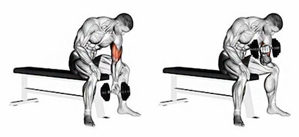 TOP 6 cviků pro mohutný rozvoj bicepsů