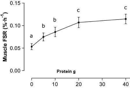 Kolik bílkovin mohu přijmout?