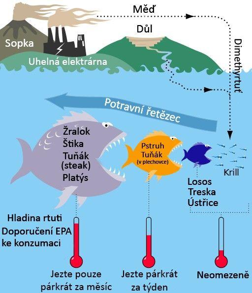 Je losos zfarmy nebo tuňákz konzervy pro naše tělo toxickou hrozbou?