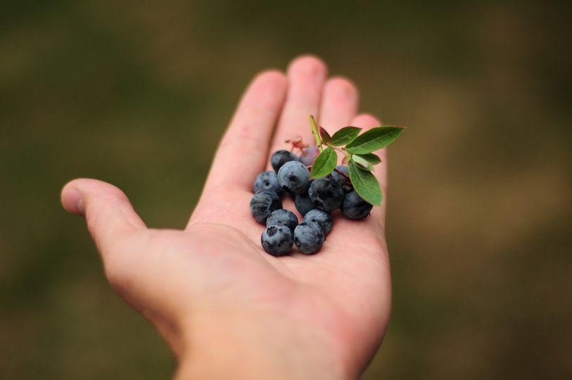 Lesní plody: v čem jsou pro naše tělo výjimečné?