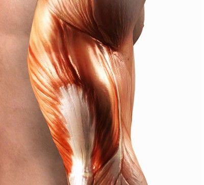Svaly, šlachy, kosti a pohyb - anatomie