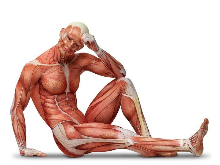 Typy svalů - rychlá a pomalá svalová vlákna