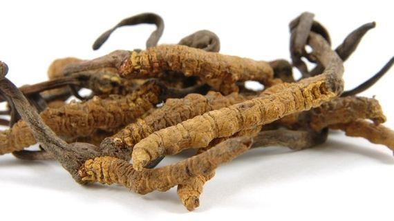 Cordyceps - magická houba