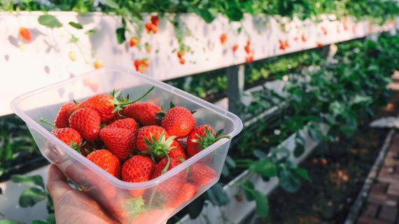 Hubnutí a ovoce? No jasně! 5 druhů, které přijdou k chuti a mají málo kalorií