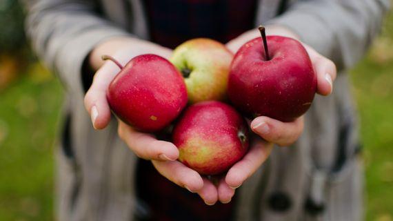 Jablka patří mezi nejzdravější ovoce na světě. Víte proč?