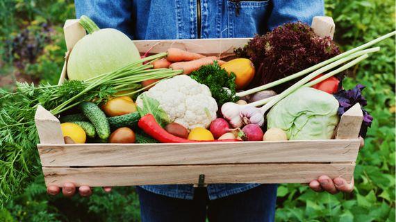 Trendy ve výživě na rok 2021: vládnout bude podpora imunity a ekologie